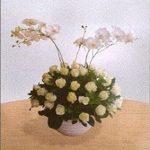 Bunga Meja Mawar